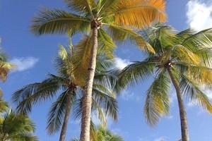 Guadeloupe - 9 jours et 7 nuits - à partir de  1290€