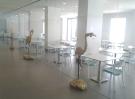 salle commune albufeira