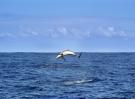 dolphin-422926_1920