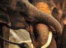 elephant-385268