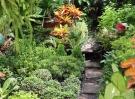 garden-72054