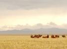 mongolia-695267