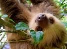 sloth-1879999